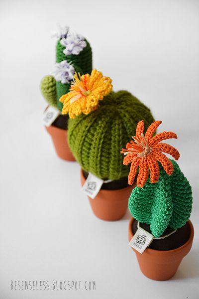 besensseles cactus