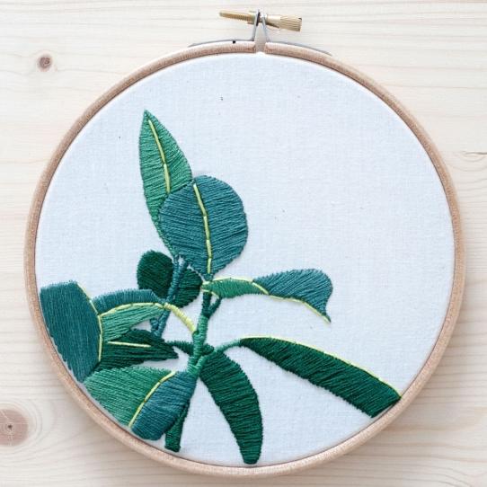 Plantas misskatiuska.jpg